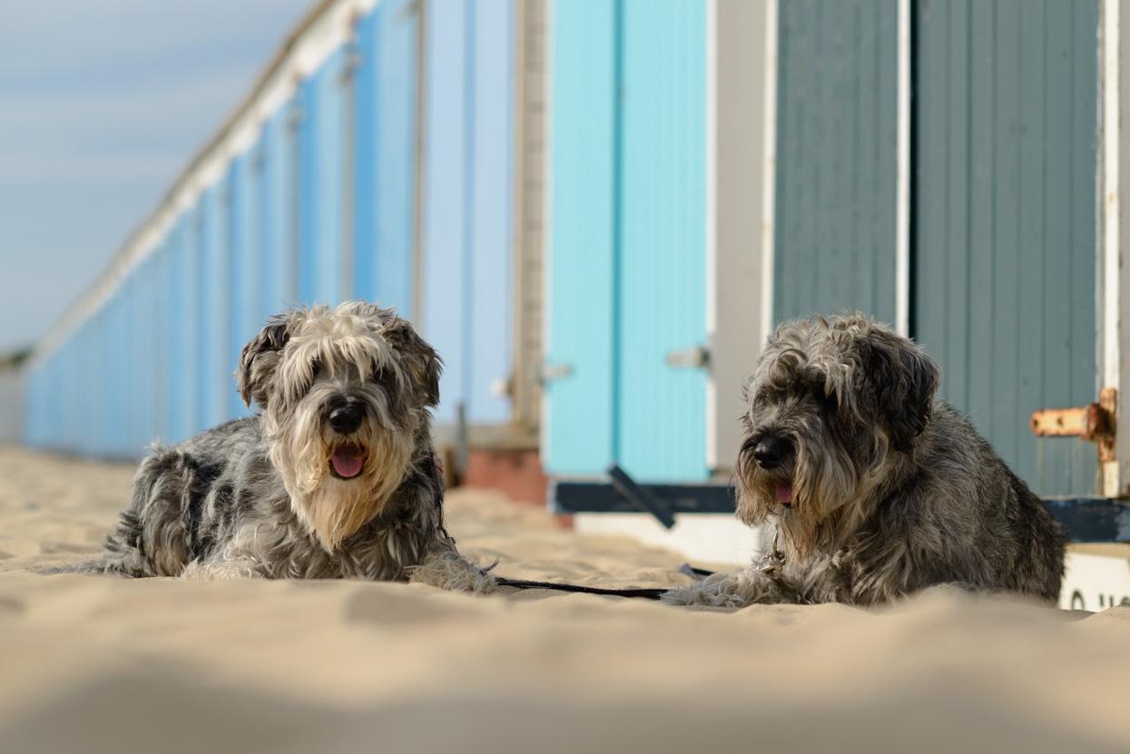 Hondjes aan zee